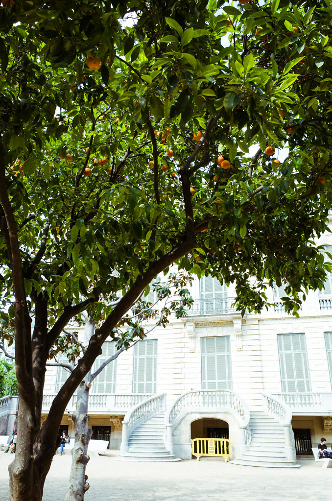 Under the orange tree, Barcelona