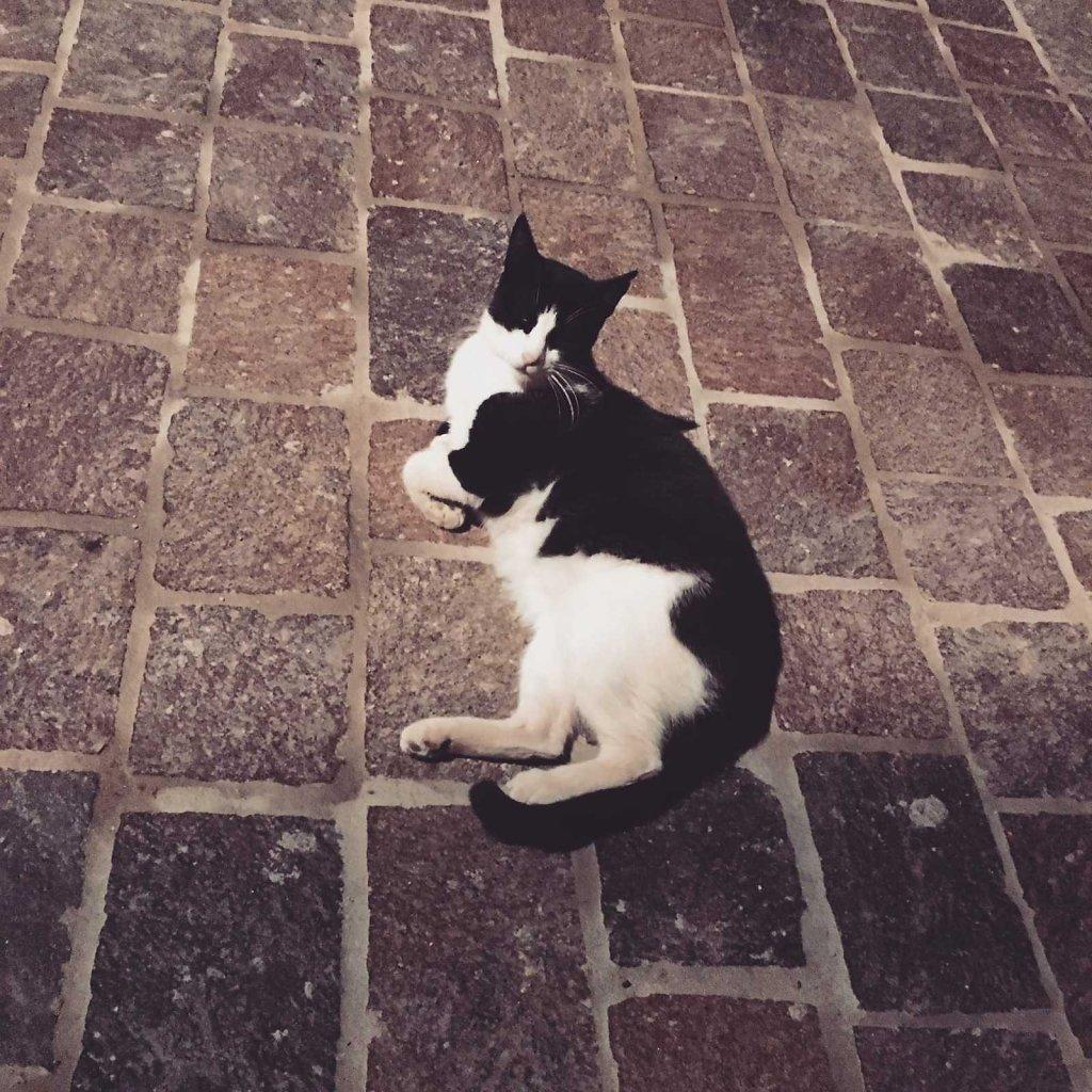 Cretan cat street posture