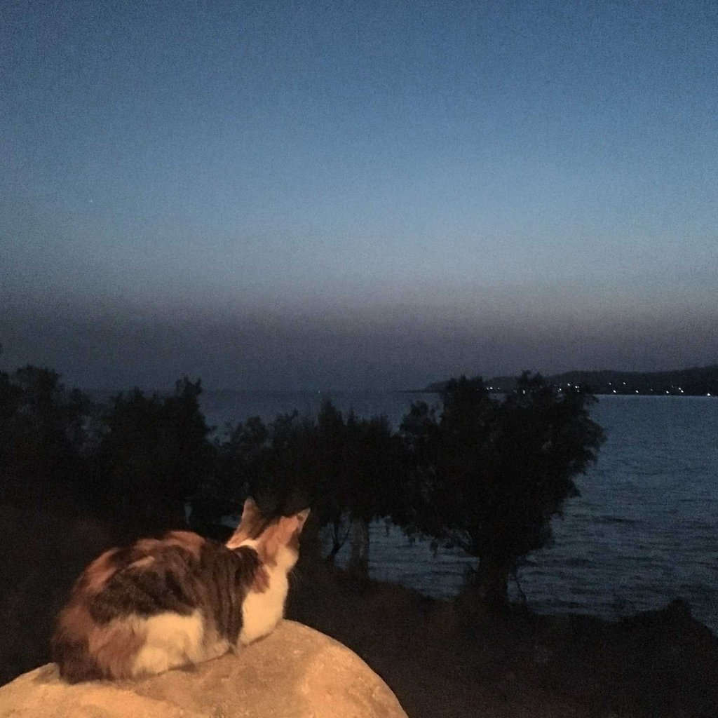 Cretan cat can stare down the sun