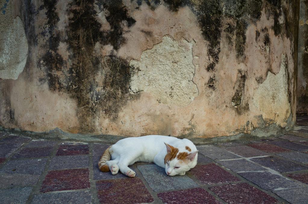 Cretan cat relaxing