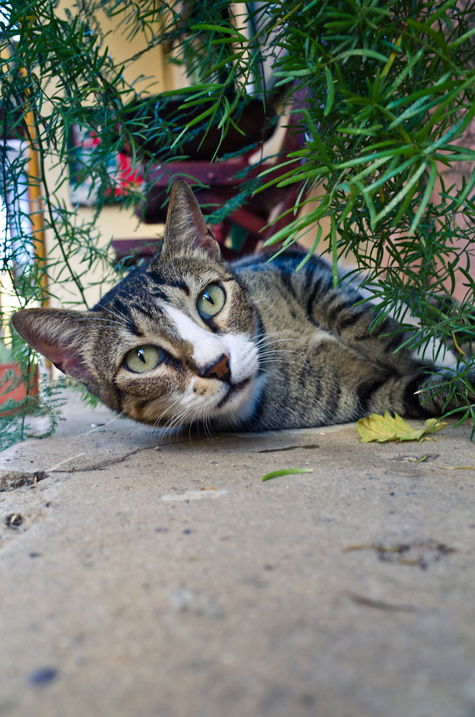 Cretan cat thousand mile stare