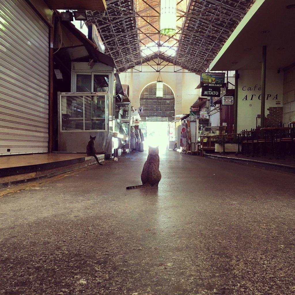 Cretan cats looking towards the light
