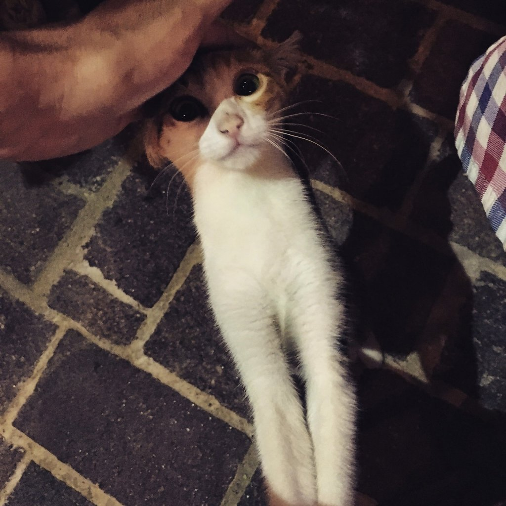 Cretan cat wants your love