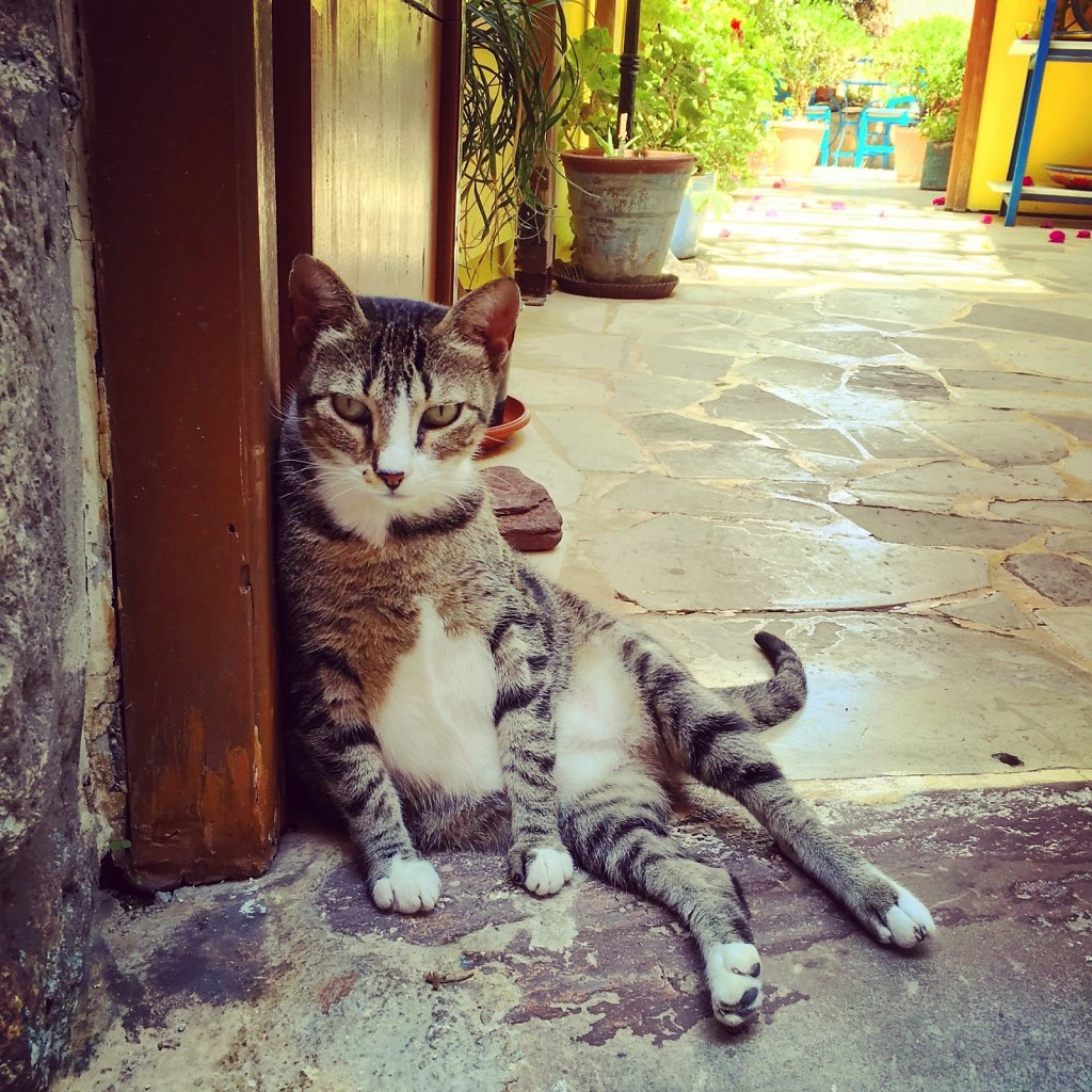 Cretan cat people watching