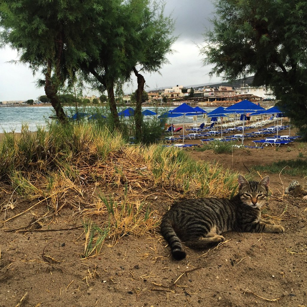 Cretan cat knows how to blend in
