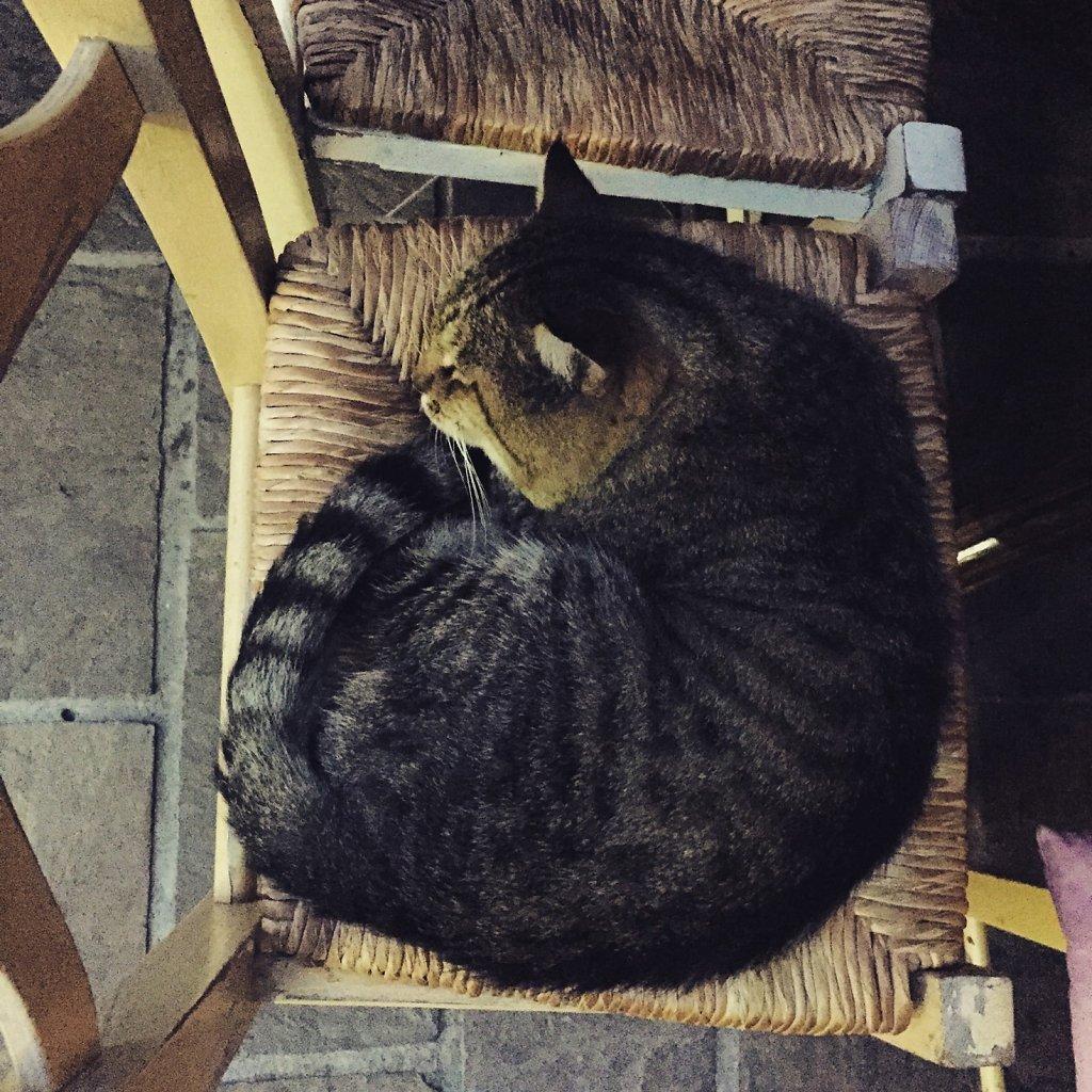 Cretan cat fits here now