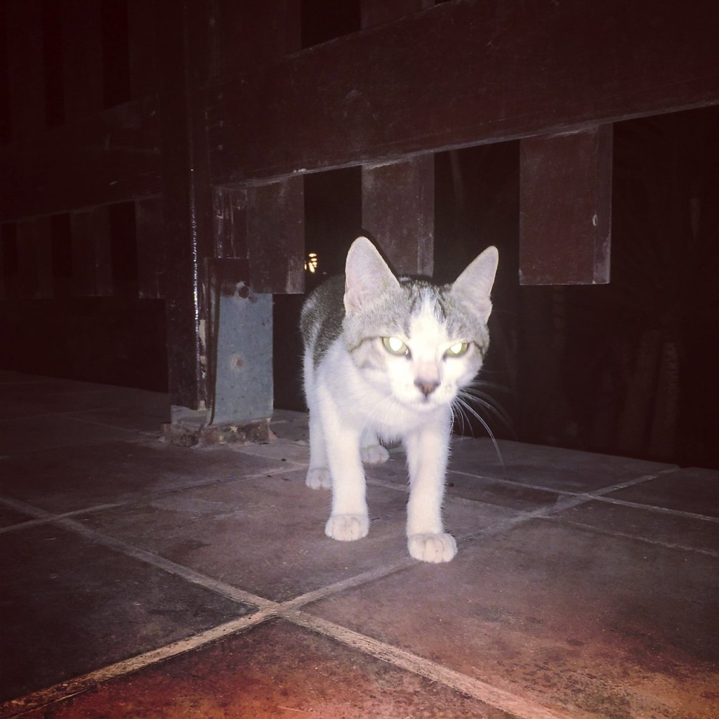 Cretan cat will appear out of nowhere