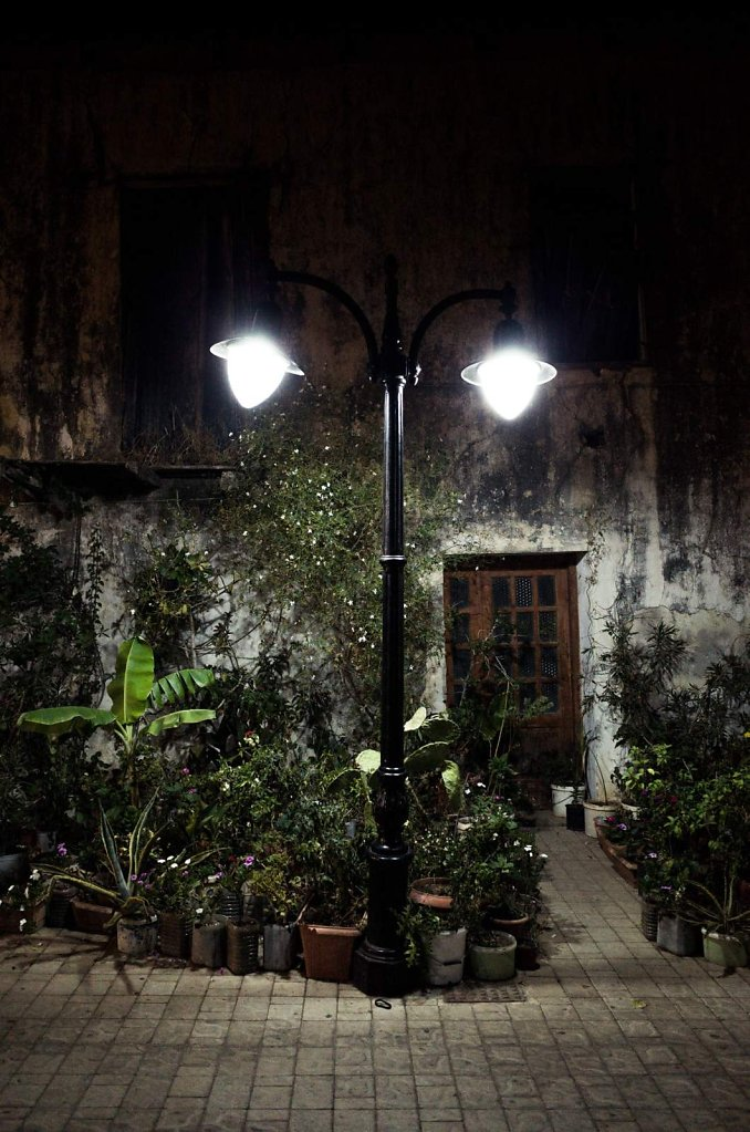 Street light and plants