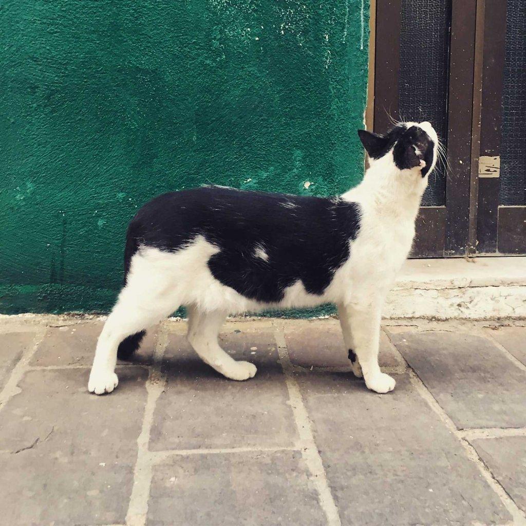Cretan cat doesn't miss a thing
