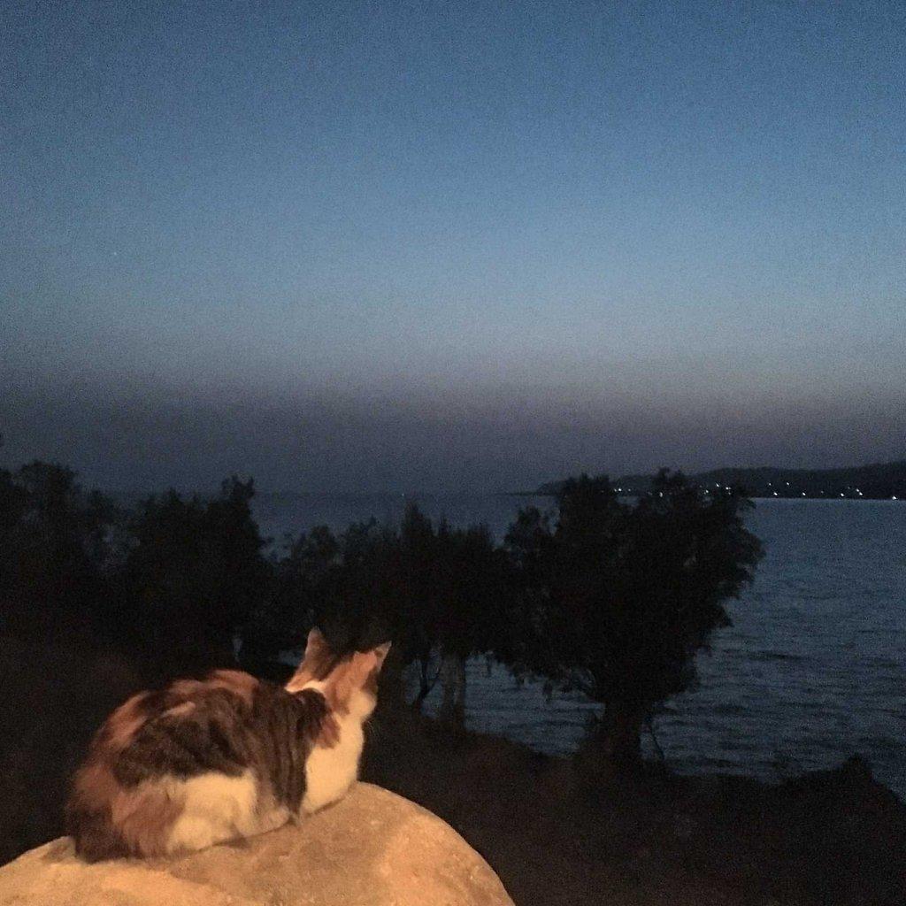 Cretan cat can stare down the sun