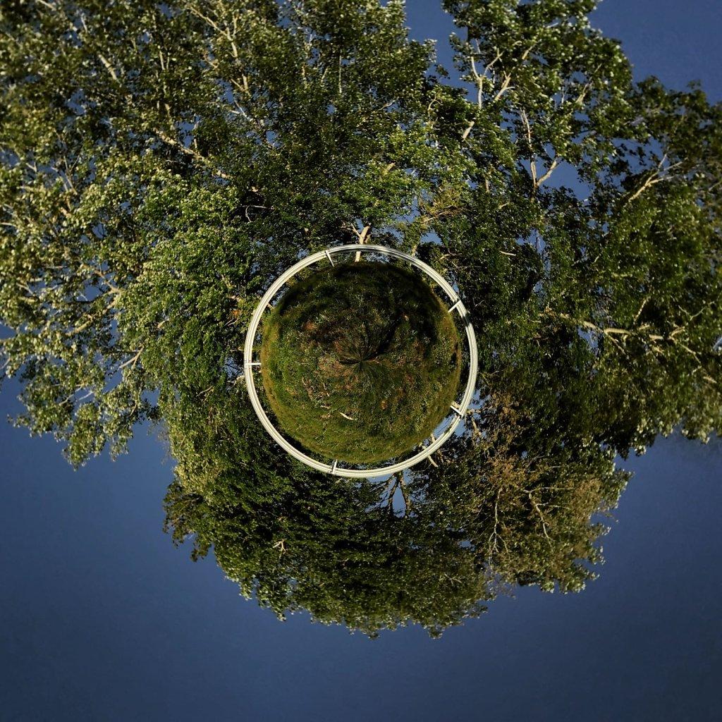 It's a tree's world