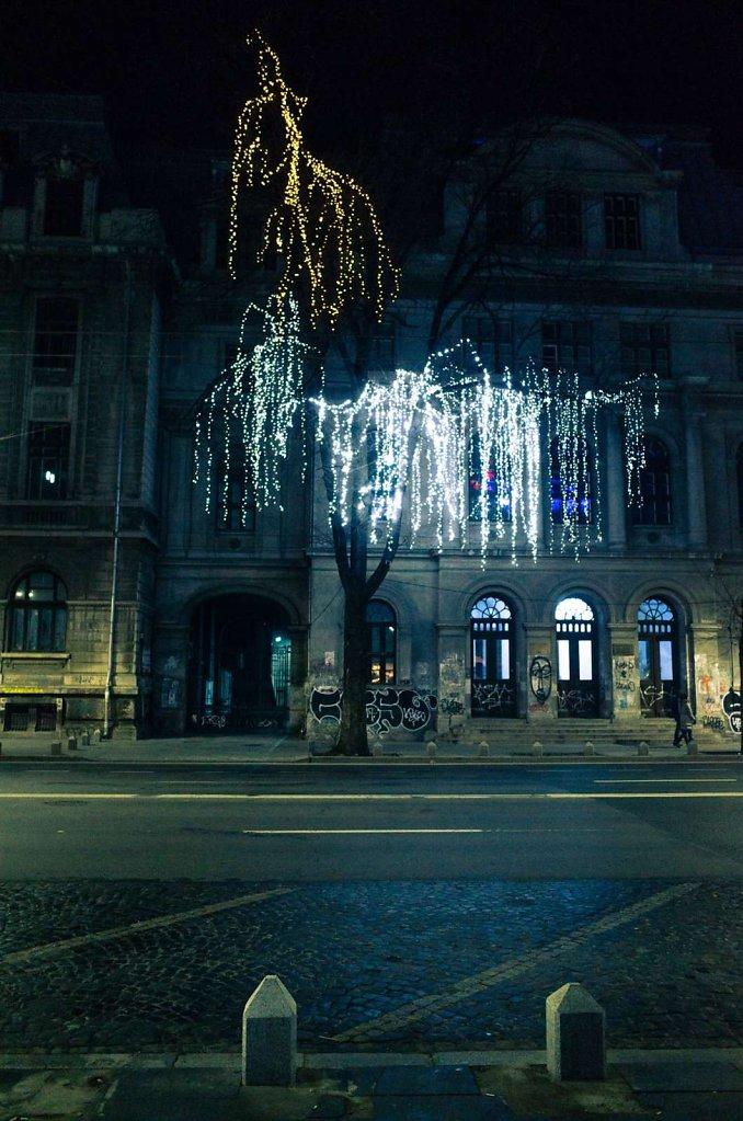 Festive lighting in a tree, Bucharest